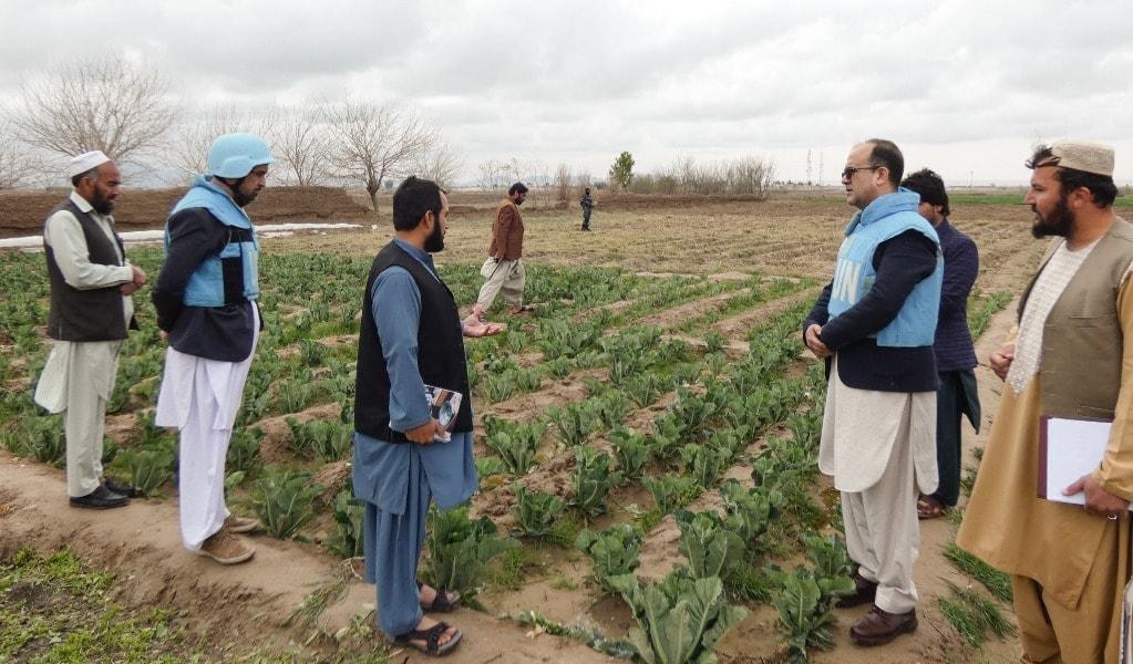 В Афганистане разминируют провинцию Бамиан